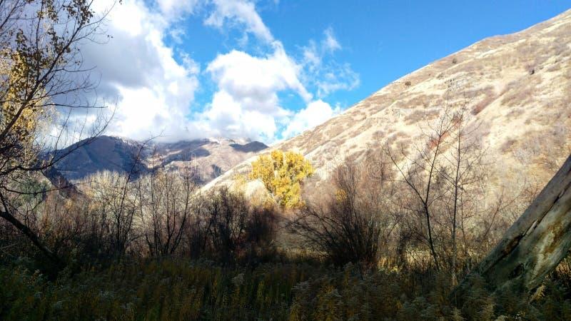 Złoty drzewo w South Fork Provo jarze obrazy royalty free
