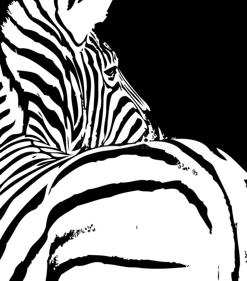 Zèbre illustration de vecteur