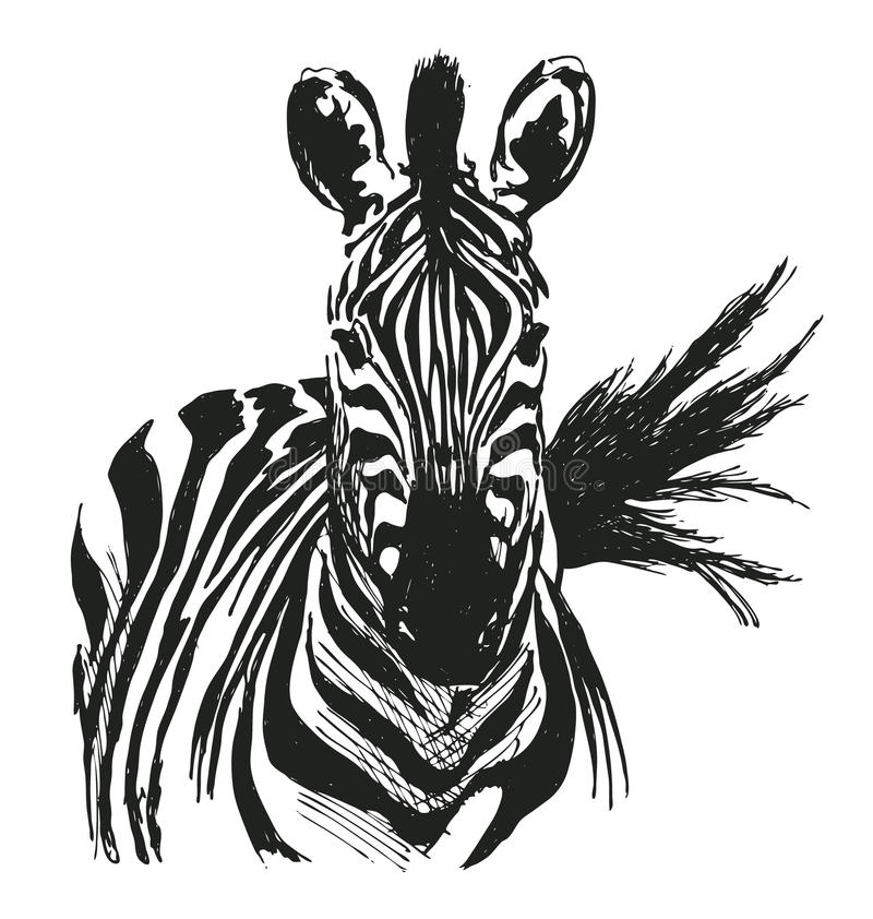 Zèbre de dessin de main illustration stock