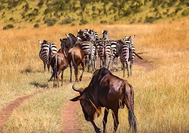Zèbres et gnou émigrant à Mara images libres de droits