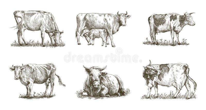 Züchtende Kuh Satz Vektorelemente vieh lizenzfreie abbildung