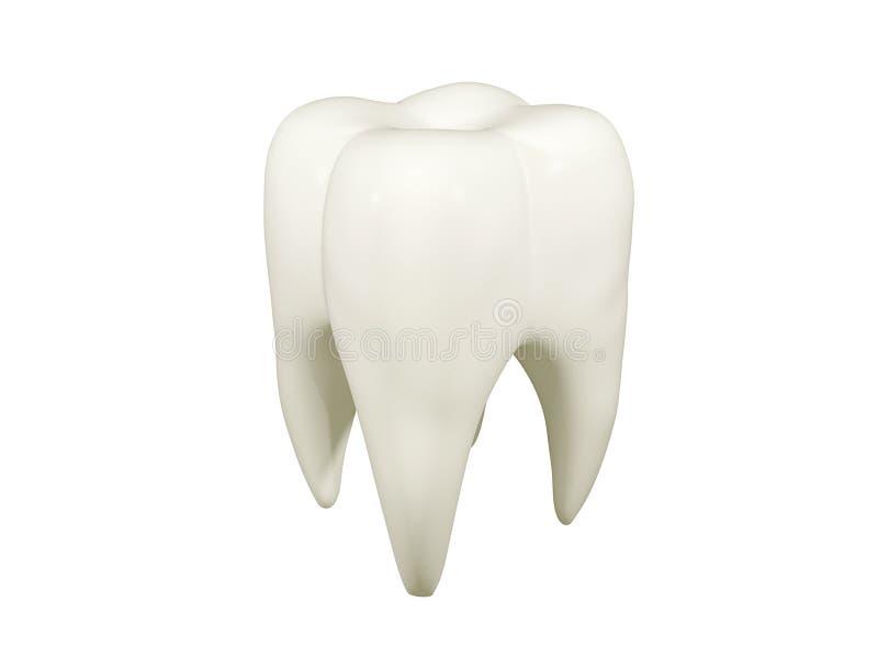 ząb trzonowy royalty ilustracja