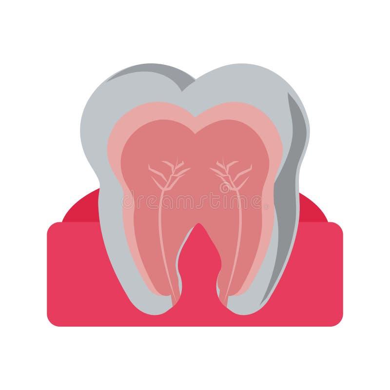 Ząb z nerwowym w dziąśle royalty ilustracja