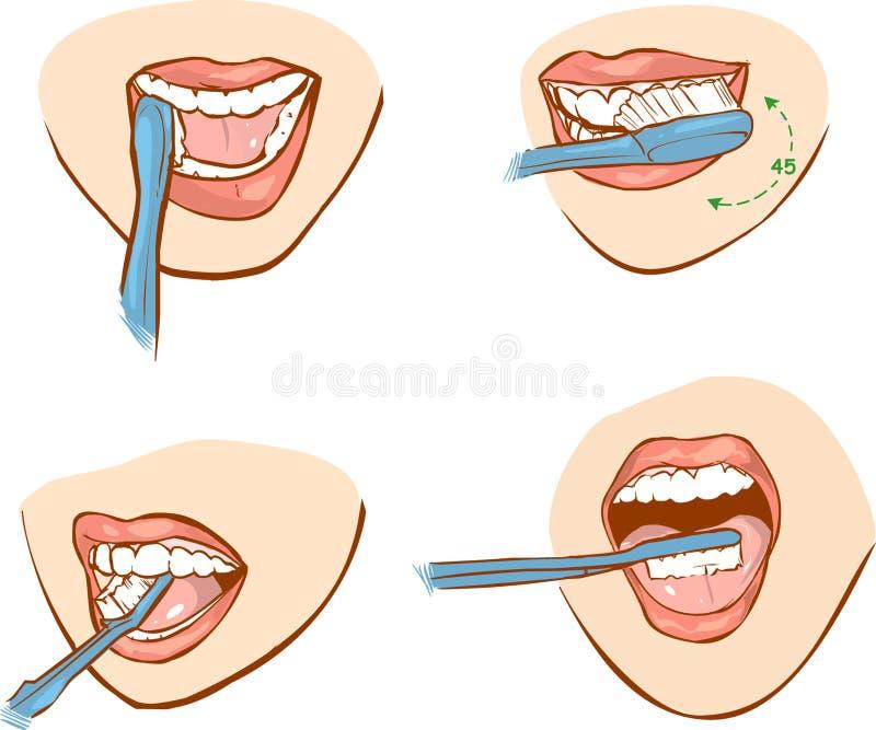 Zębu szczotkować royalty ilustracja