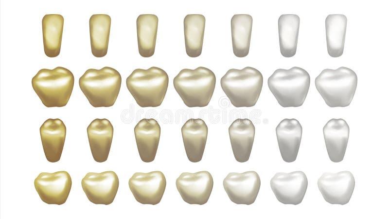 Zęby Bieleje wektor Przed i po widokiem zębów bieleć Stomatologicznego technika pojęcie button ręce s push odizolowana początku i ilustracja wektor