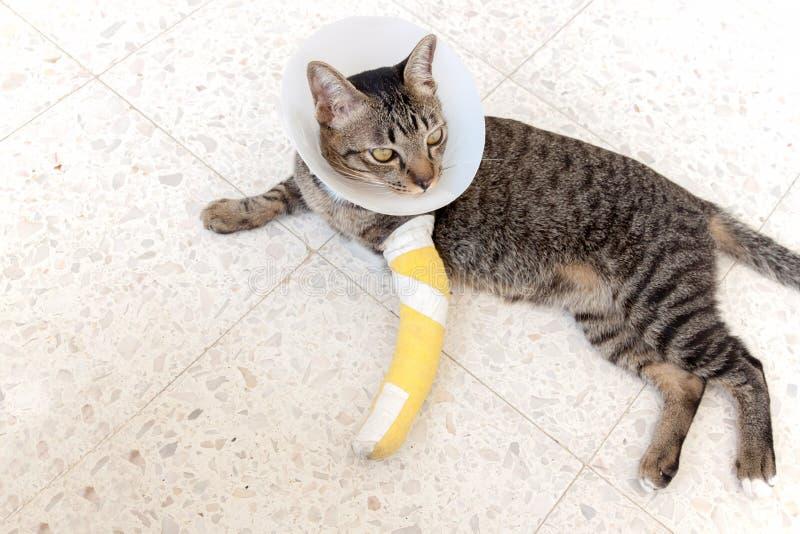 Złamana noga łubka kot zdjęcia royalty free