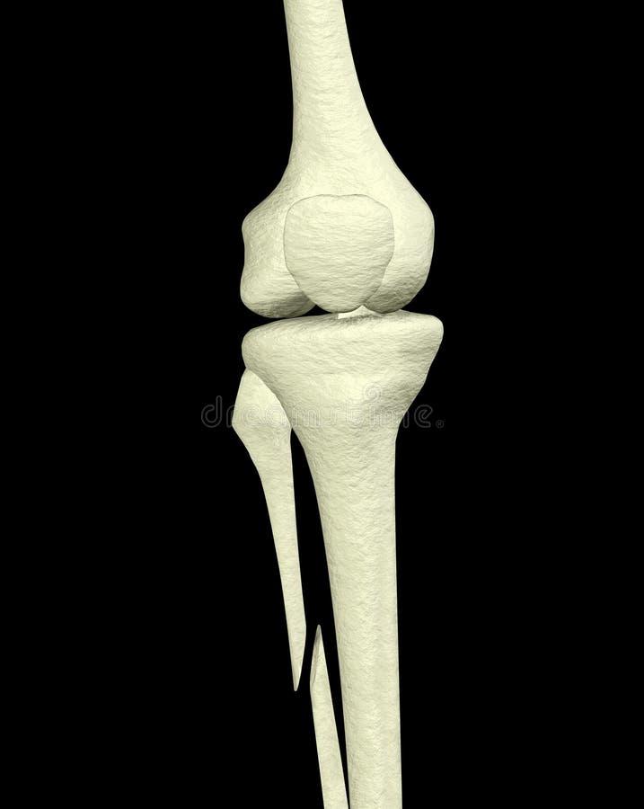 złamana noga royalty ilustracja