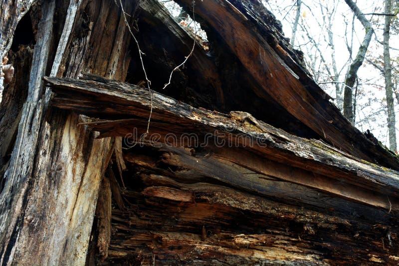 złamany drzewo fotografia stock