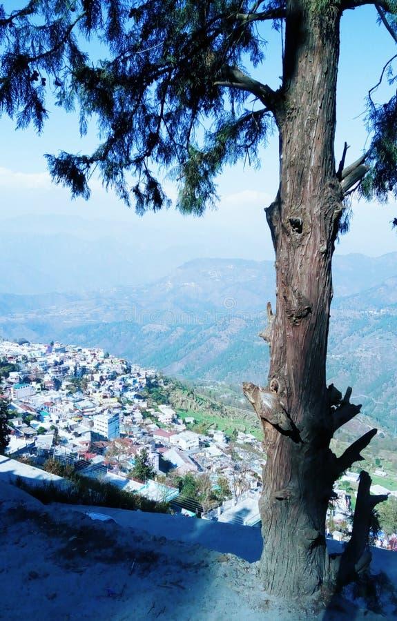 Złamany Drzewo Górskie w Strom Sunlight View Uttrakhand podróżnicy india Daylight fotografia royalty free