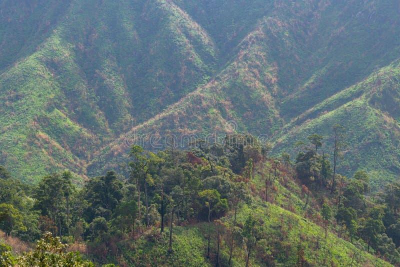 Złożoność góry krajobrazowa i drzewna różnorodność las zdjęcia royalty free