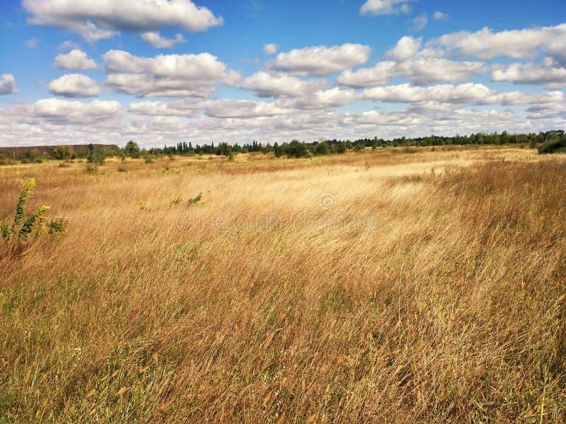 Złociści pszeniczni pola fotografia stock