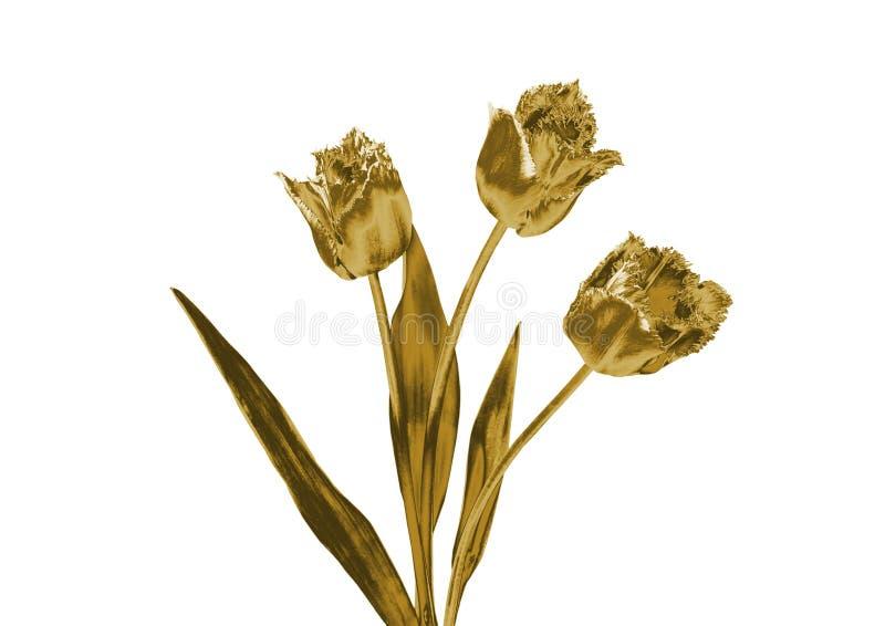 Złociści tulipany ilustracja wektor