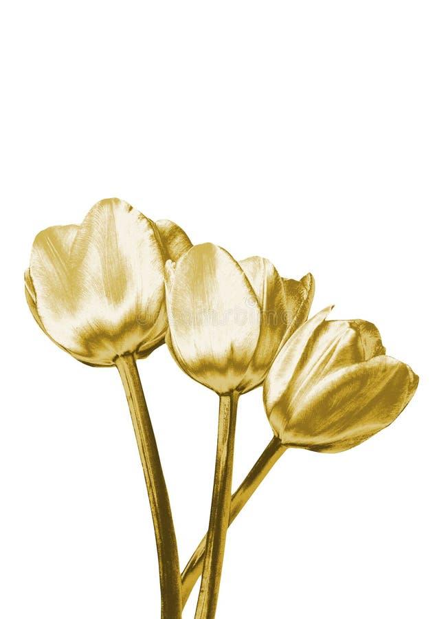 Złociści tulipany ilustracji