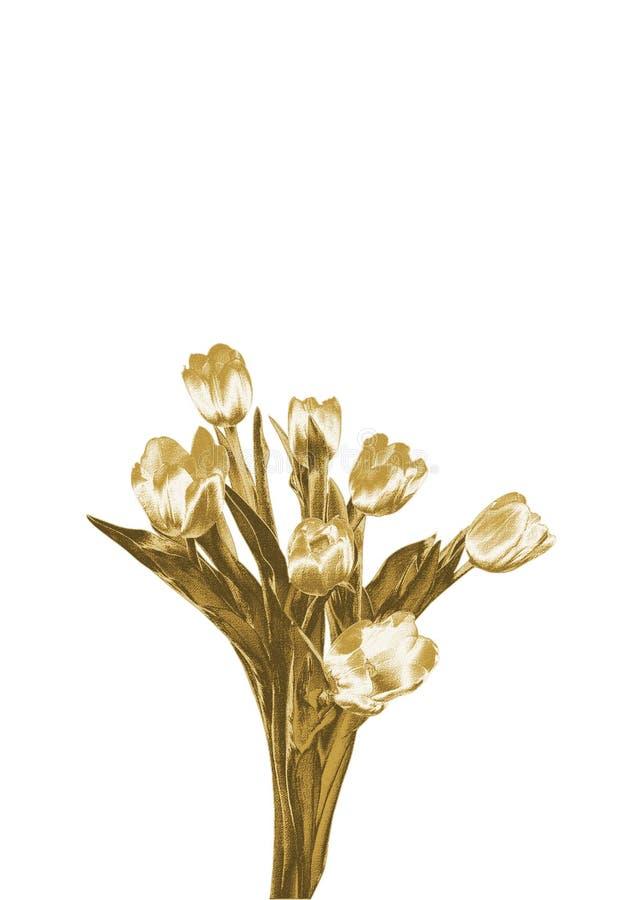 Złociści tulipany zdjęcia royalty free