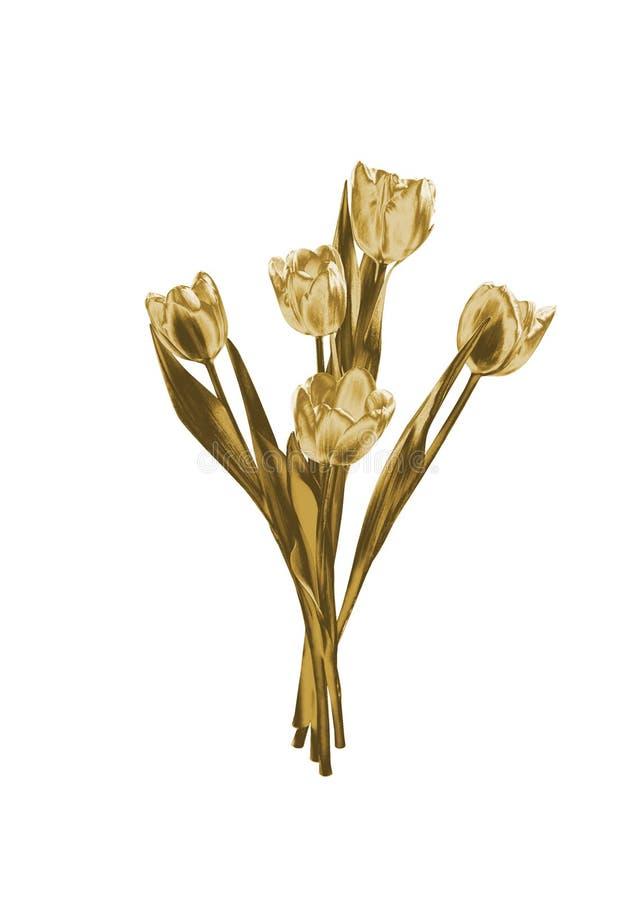 Złociści tulipany obrazy royalty free