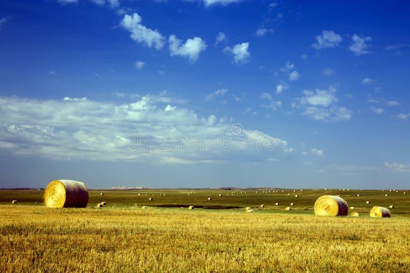 Złoci Hayfields w Południowo-zachodni Południowym Dakota, Bawoli Gap obszary trawiaści zdjęcia stock