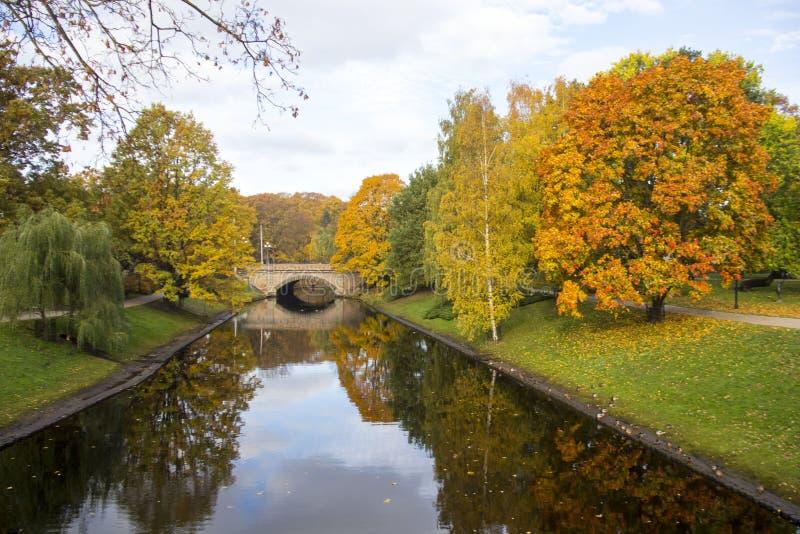 Złoci jesieni drzewa wokoło Ryskiego miasto kanału, Latvia, Europa fotografia stock