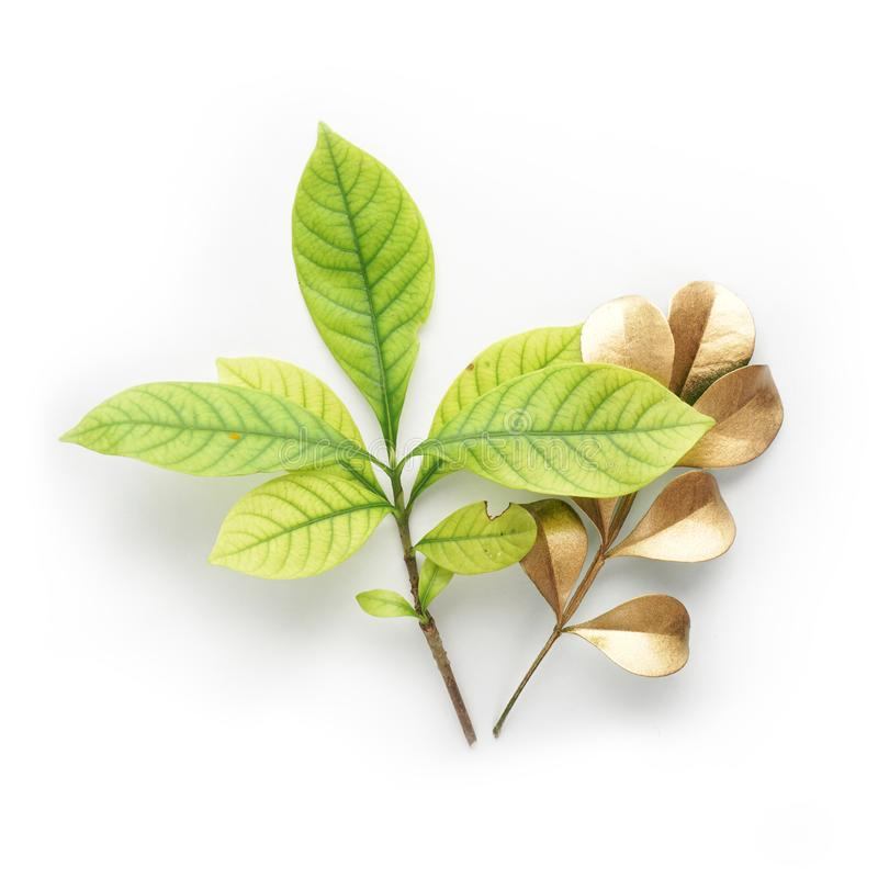Złoci liścia projekta elementy Dekoracja elementy dla zaproszenia, ślubne karty, valentines dzień, kartka z pozdrowieniami Odizol obraz stock