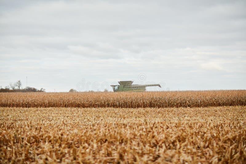 Złoci pszeniczni uprawa, ścierń i syndykata żniwiarz, fotografia royalty free