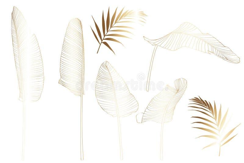 Złoci Tropikalni Palmowi banana drzewa liście odizolowywający na białym tle Palmowego liścia nakreślenie, egzotyczne ilustracje ilustracji