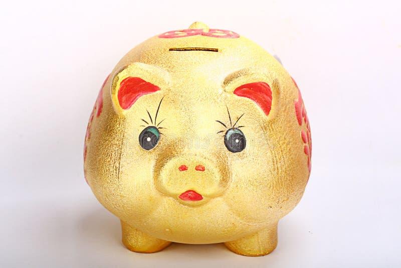 złocista świnia obrazy royalty free