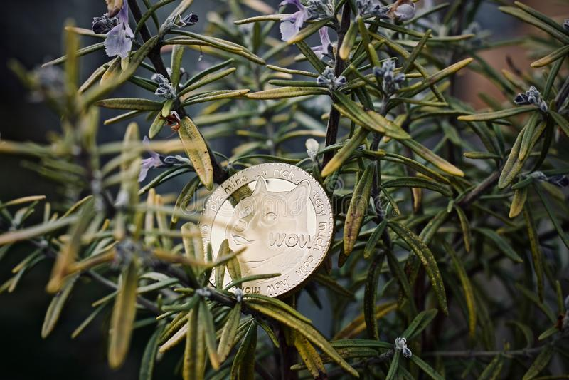 Złocista dogecoin moneta fotografia royalty free