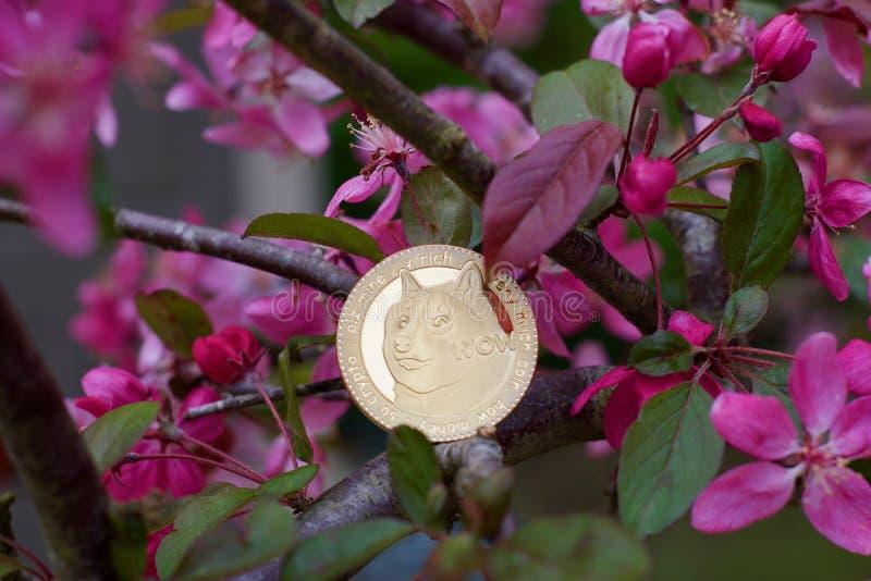 Złocista dogecoin moneta obraz stock