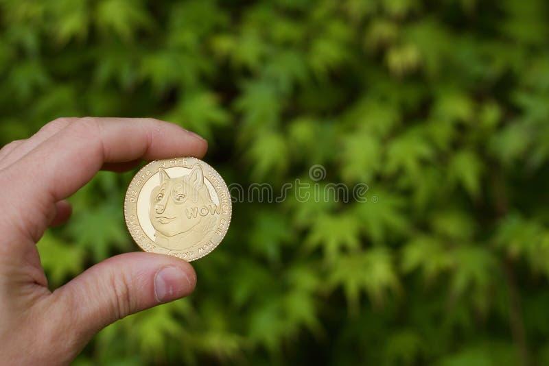 Złocista dogecoin moneta zdjęcia stock