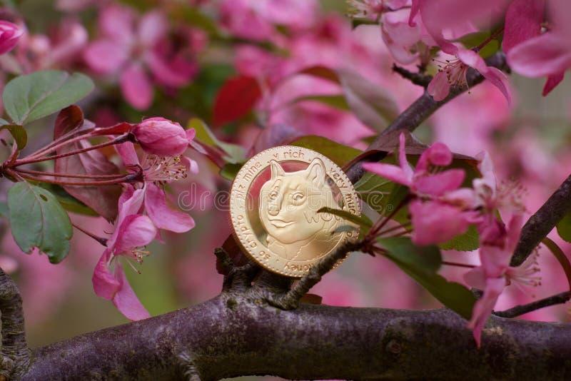 Złocista dogecoin moneta zdjęcie royalty free