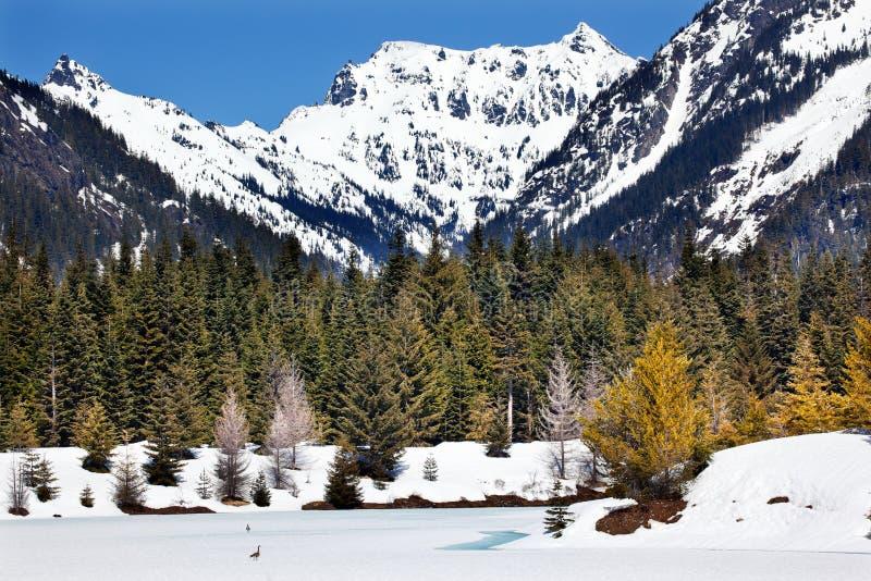 złocista jeziorna przepustki snoqualme śniegu wiosna Washington obrazy royalty free