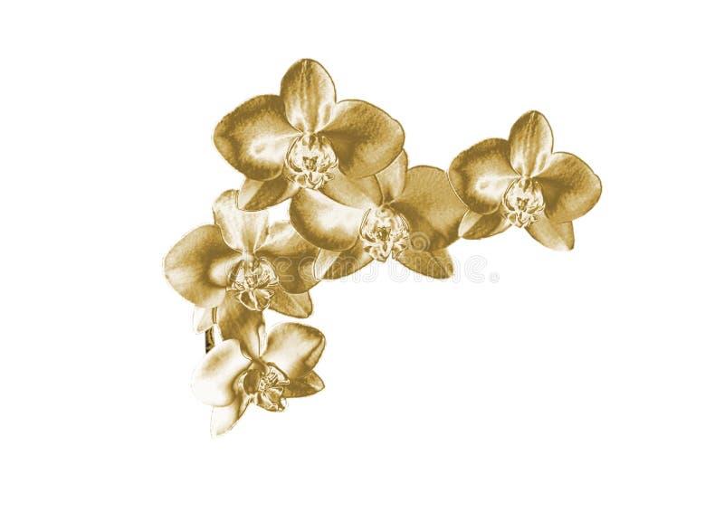Złocista orchidea obraz stock
