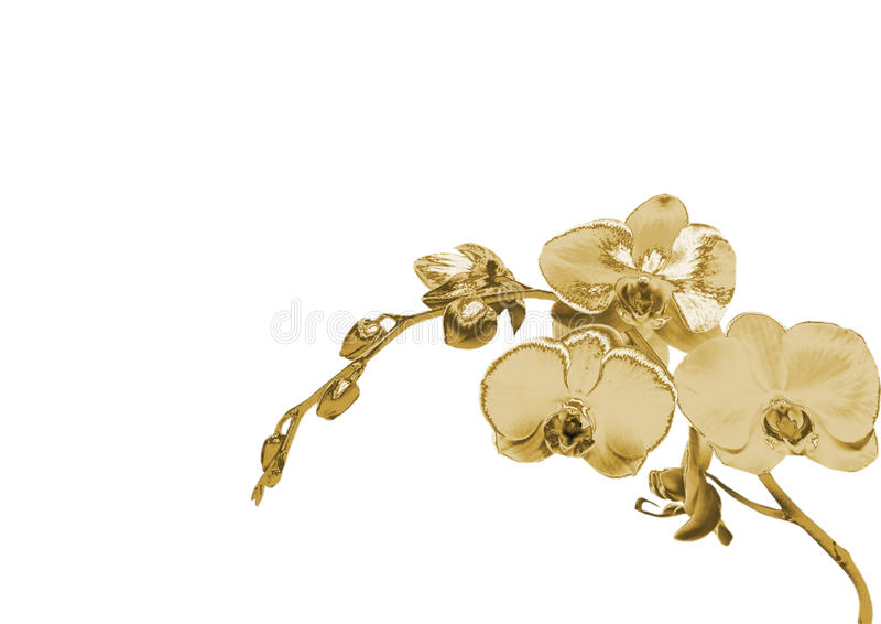 Złocista orchidea zdjęcia stock