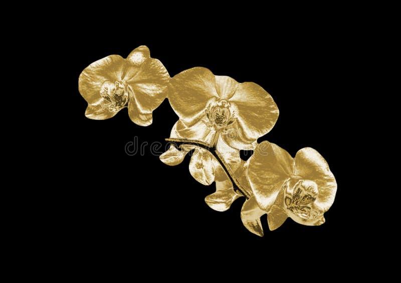 Złocista orchidea obrazy royalty free