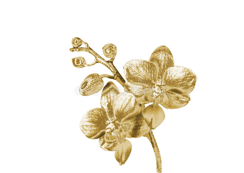 Złocista orchidea obrazy stock