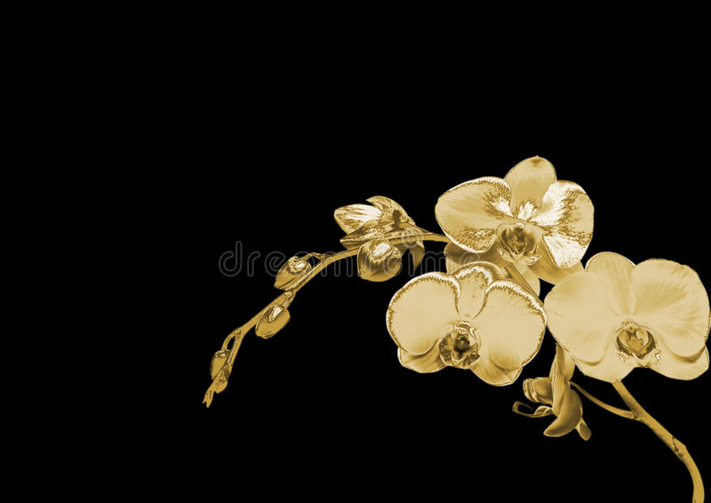 Złocista orchidea fotografia royalty free