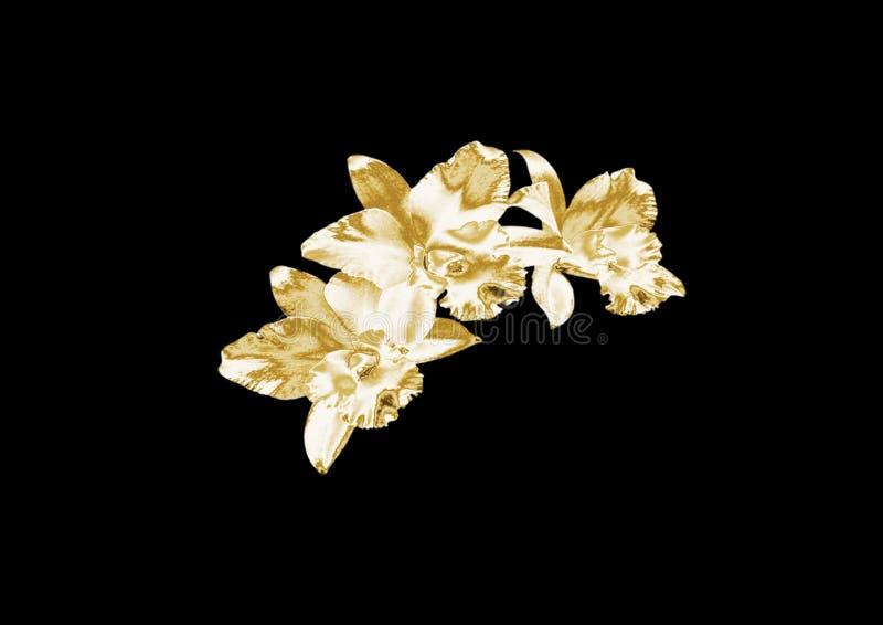 Złocista orchidea obraz royalty free