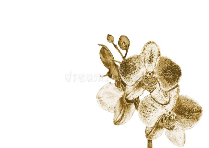 Złocista orchidea zdjęcie stock