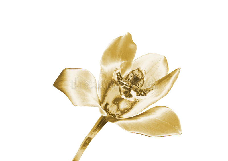 Złocista orchidea zdjęcia royalty free