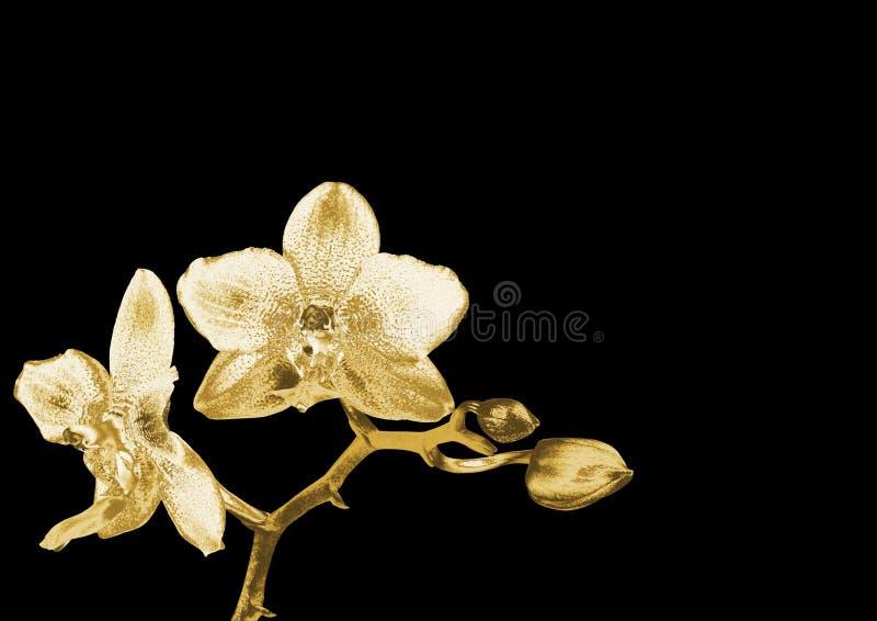 Złocista orchidea fotografia stock