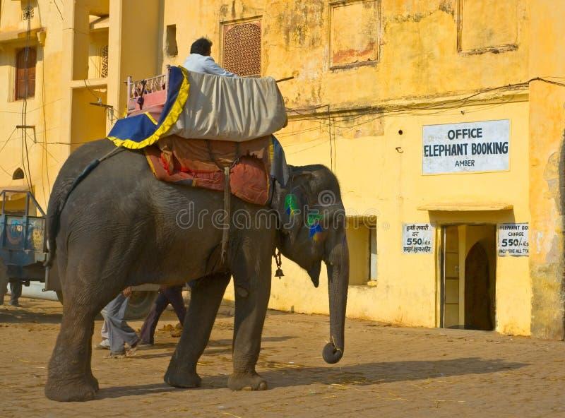 złocista słonia fortu ind Jaipur przejażdżka obraz stock