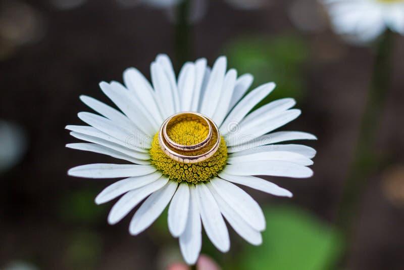 Złociste obrączki ślubne na bukiecie kwiaty dla panny młodej obraz stock
