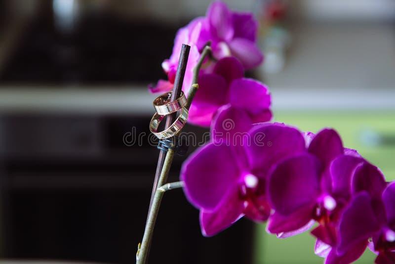 Złociste obrączki ślubne na kwiat orchidei obraz stock