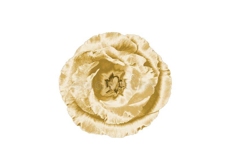 Złocisty kwiat zdjęcie stock