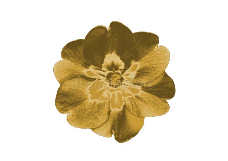 Złocisty kwiat obrazy royalty free