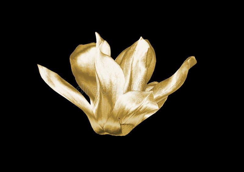 Złocisty kwiat fotografia stock