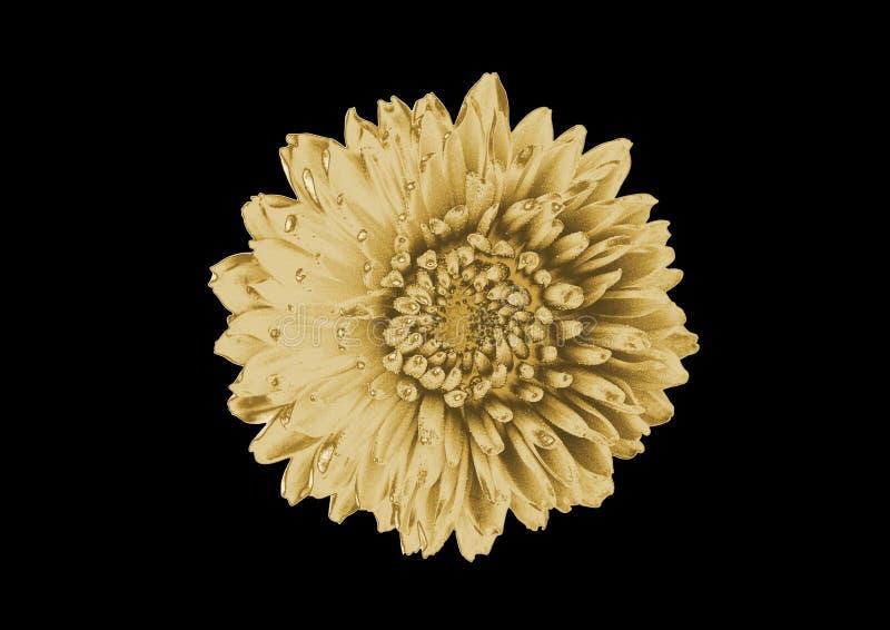 Złocisty kwiat zdjęcie royalty free