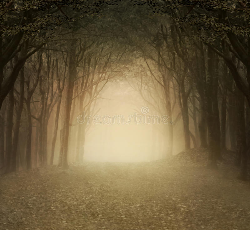 Złocisty mgłowy las royalty ilustracja