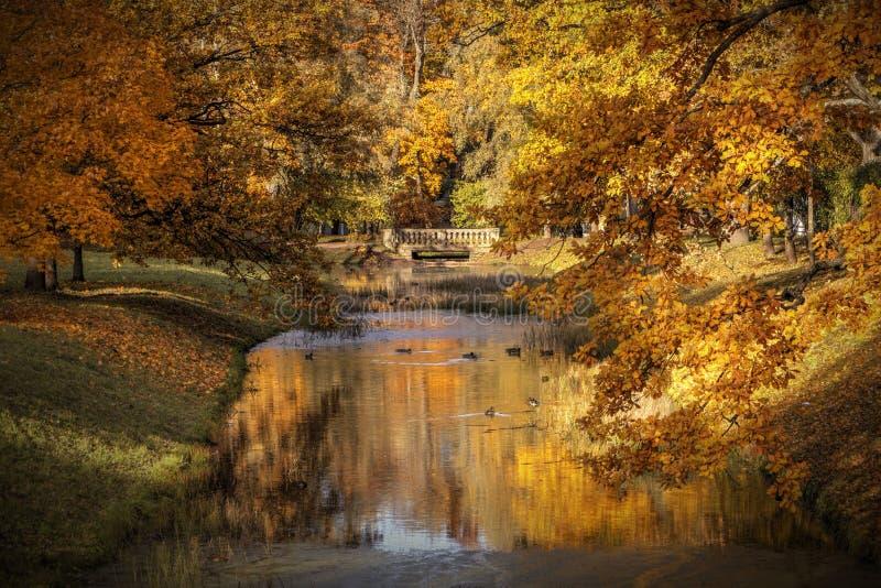 Złota jesień w Aleksander parku blisko Tsarskoye Selo Miasto Pushkin, Leningrad region Widok na moscie obraz royalty free