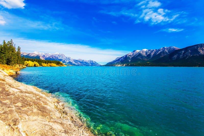 Złota jesień w Kanadyjskich Skalistych górach Gładka woda Abraham jezioro złoty ulistnienie osika i brzozy, odbija fotografia royalty free