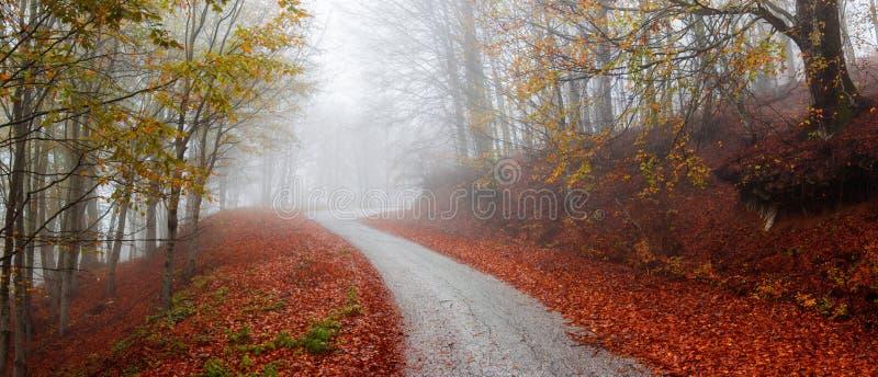 Złota lasowa droga obrazy stock